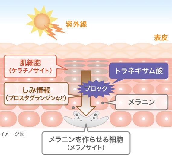 トラネキサム酸の成分・効果の解説